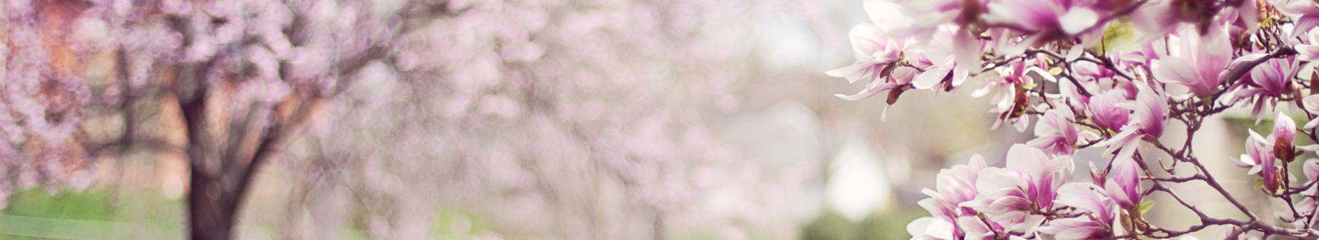 header-printemps